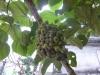 vn-2012-12-26-p1040682